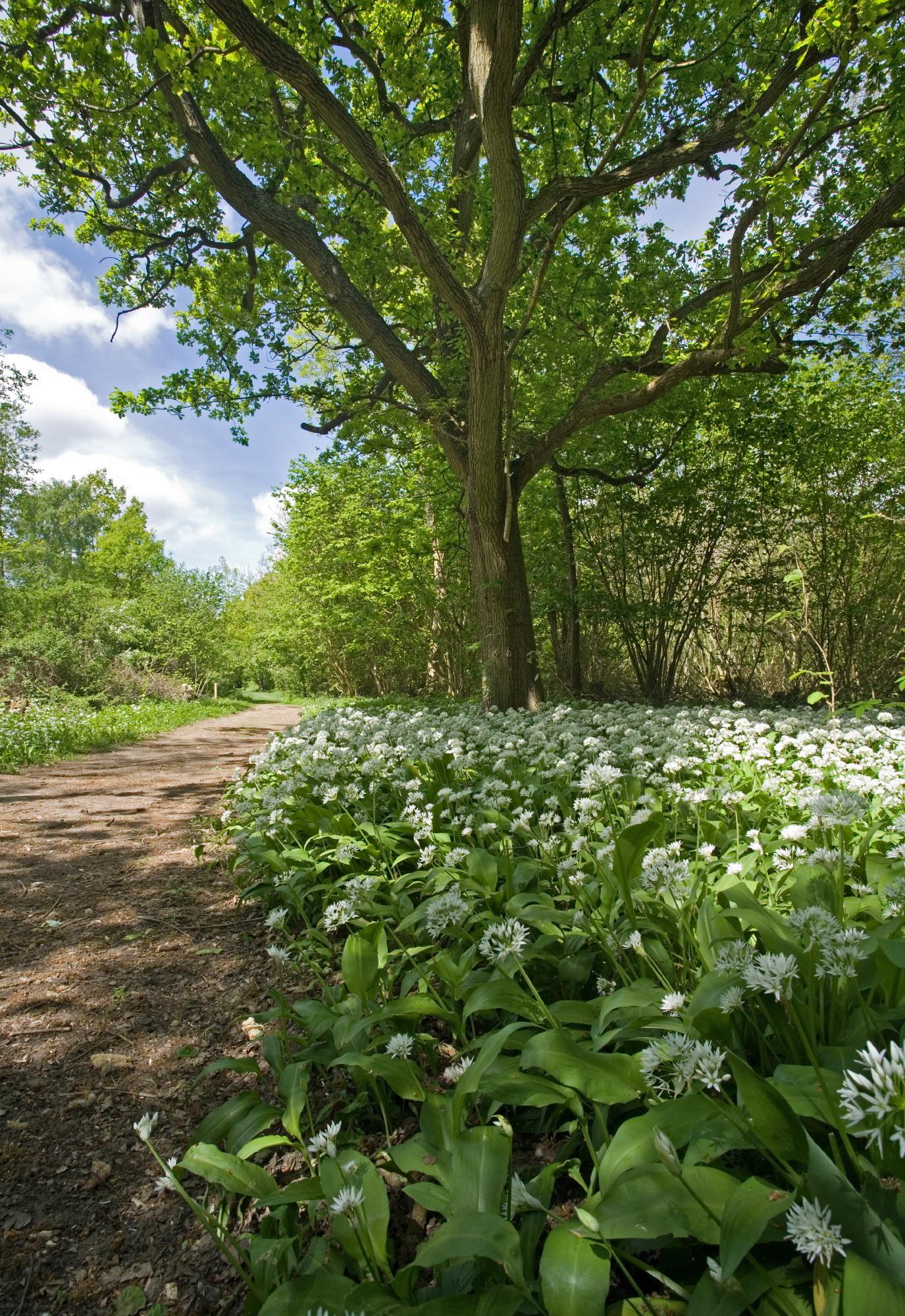 Voluntary Access in Norfolk